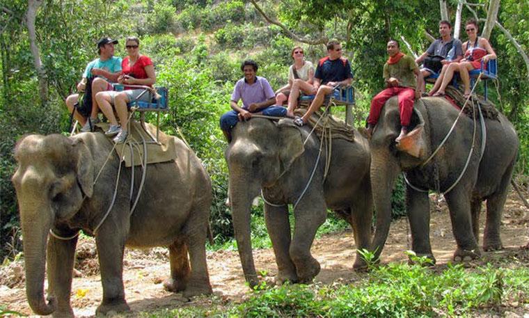 elephant-trekking-krabi